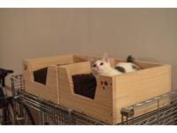 猫用ベッド1