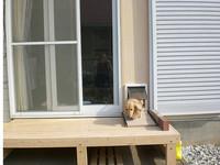 ペットドアの取り付け枠と犬