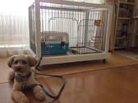 ペット ケージ台 自作 小型犬