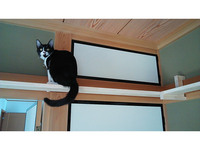 キャットウォーク 猫 DIY ペット 自作