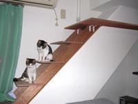 猫のおもちゃ階段